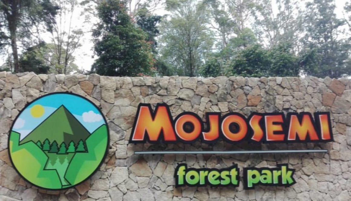 Nih Lokasi Mojosemi Forest Park Magetan, Tawarkan Lawu Forest Camp