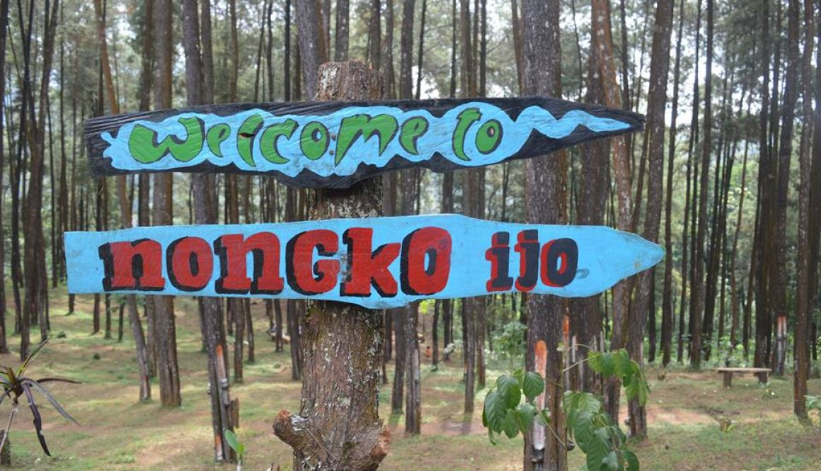 Rute Menuju Lokasi Hutan Pinus Nongko Ijo Kare Madiun