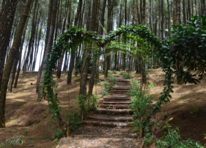 Lokasi Hutan Pinus Pengger Dlingo