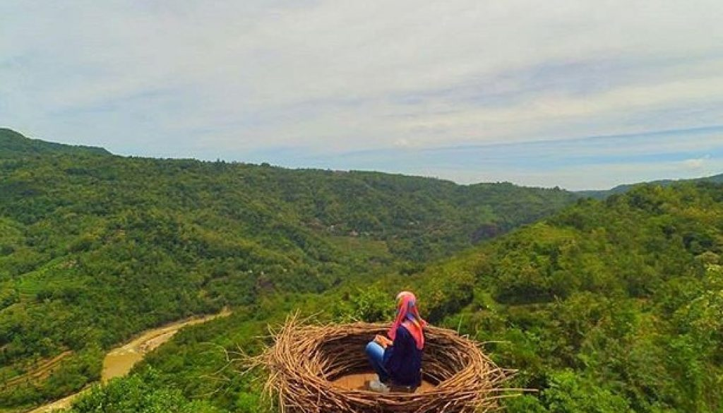 okasi Bukit Mojo Gumelem Dlingo sarang burung