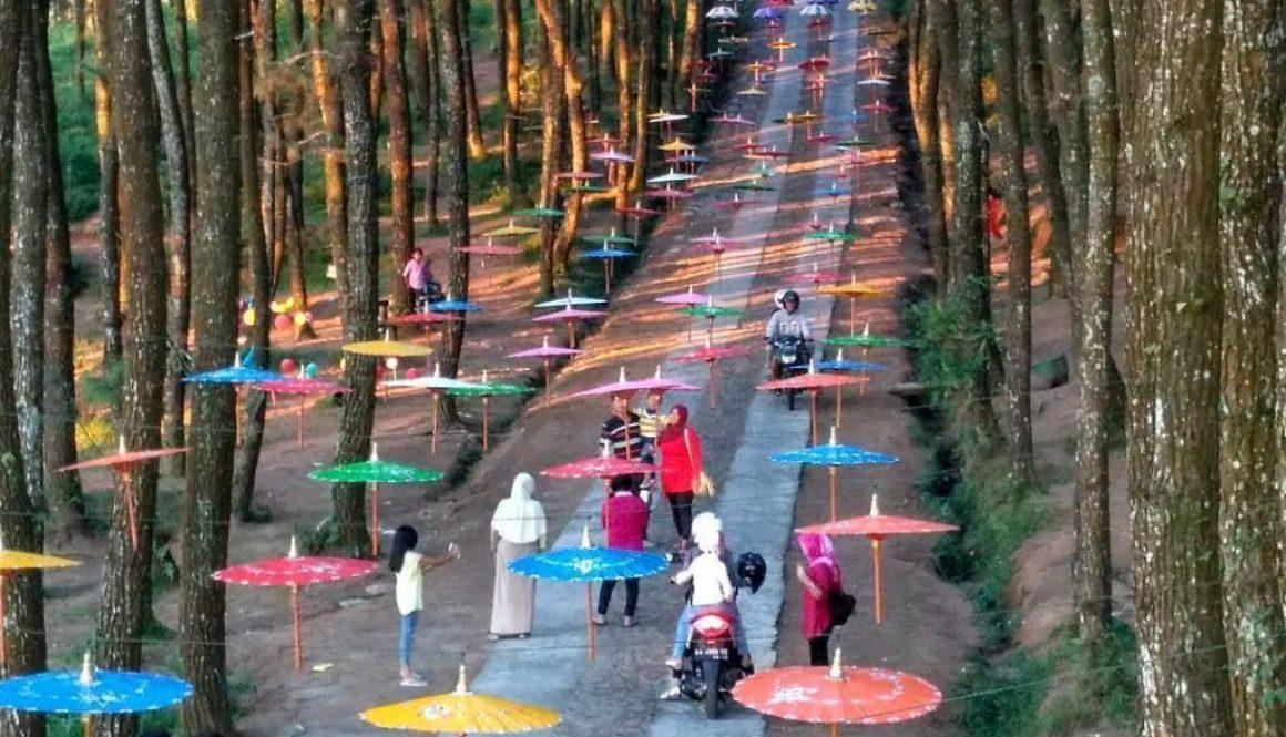 Lokasi Hutan Pinus Kragelan Magelang, Top Selfie Pinusan Di Lereng Gunung Merbabu