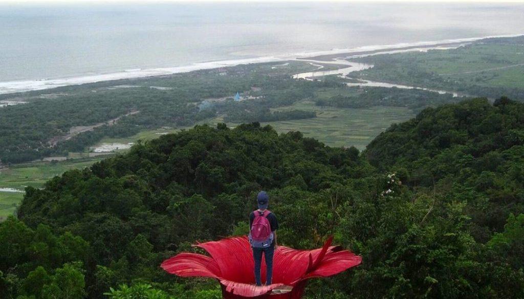 Rute Dan Lokasi Goa Jepang Surocolo Pundong Bantul, Spot Foto Bunga Sepatu