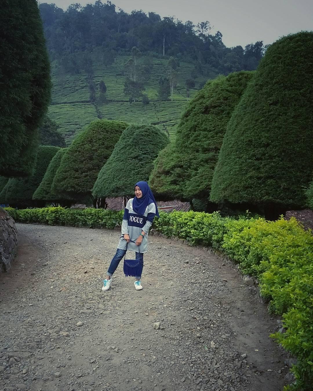 Lokasi Bukit Jamur Ciwidey Bandung