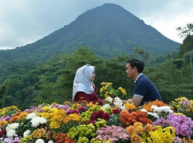 Tiket Masuk Batu Flower Garden