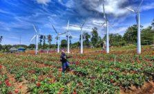 Rute Dan Lokasi Taman Celosia Gedong Songo