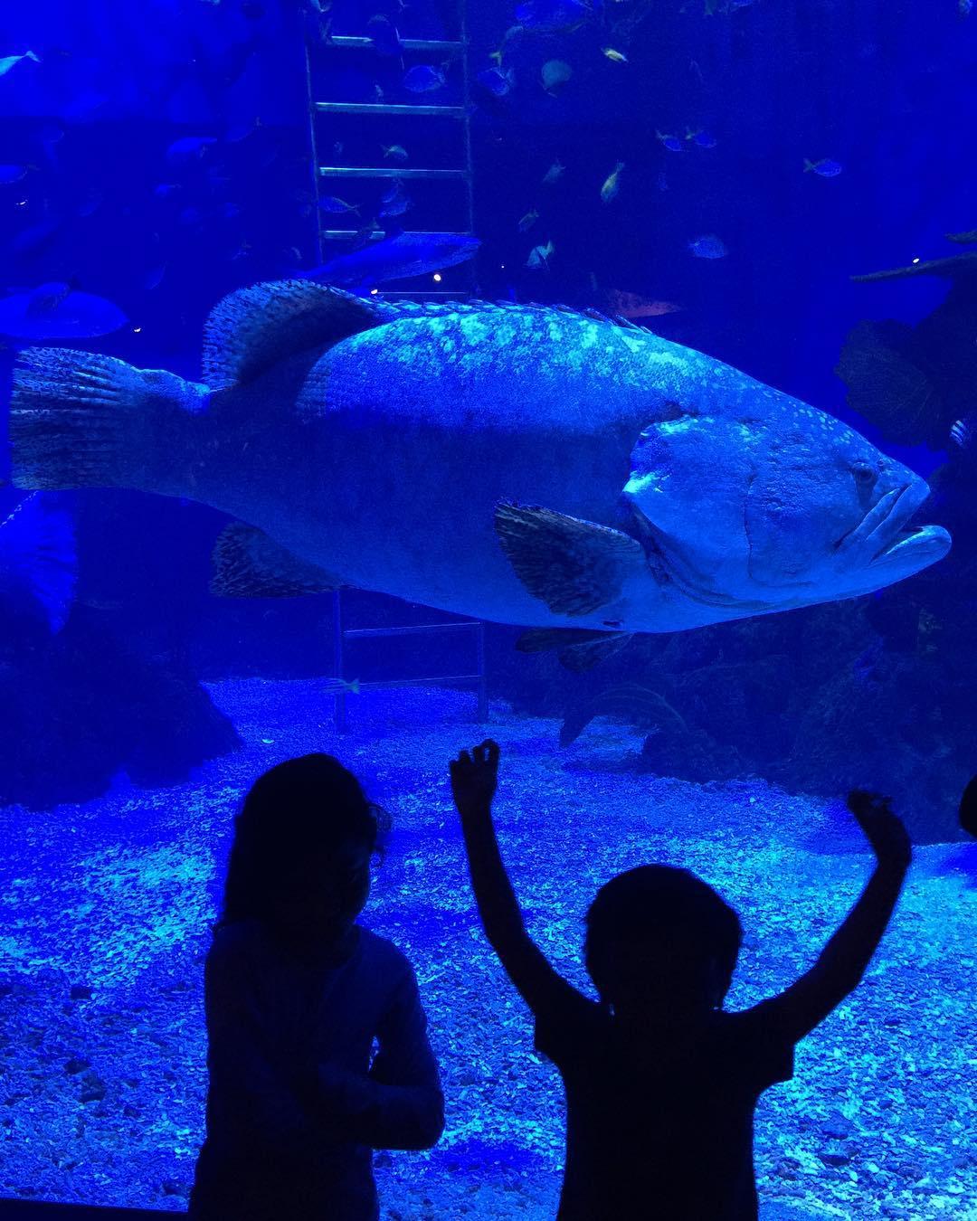 Harga Tiket Masuk Jakarta Aquarium Januari 2018